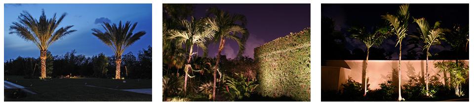 Charleston SC Tree Lighting Brings Your Trees to Life at Night & Charleston SC Tree Lighting Photo Gallery azcodes.com
