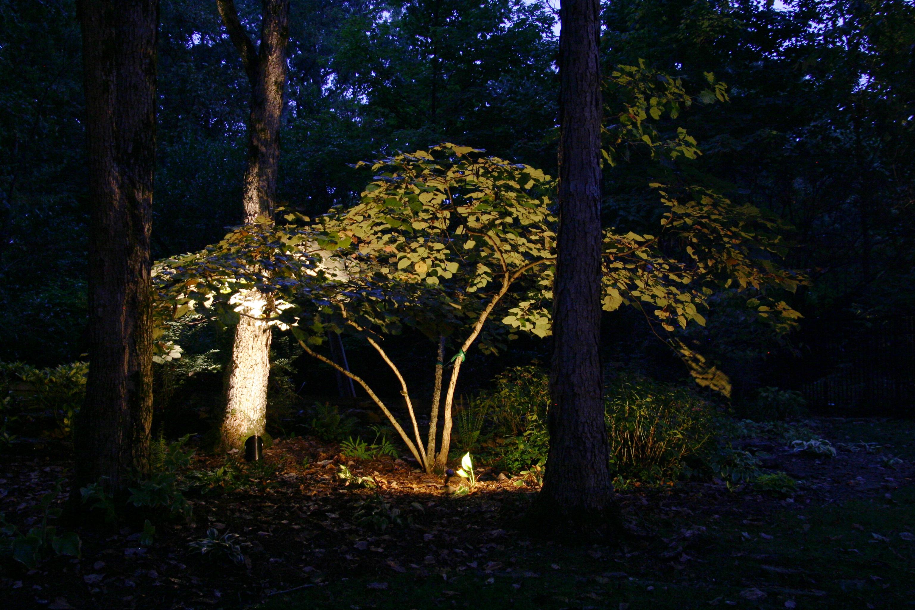 Augusta Tree Lighting for Magic and Elegance