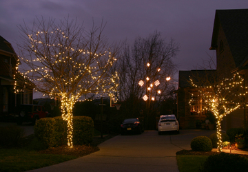 How To String Lights On A Maple Tree : Outdoor Christmas Lighting Columbia, SC