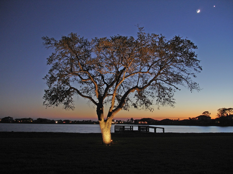 Dramatic Clearwater & Tampa Bay Tree Lighting - Tree Lighting Outdoor Lighting Perspectives