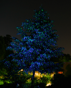 the easiest outdoor christmas tree lighting - Outdoor Christmas Tree Lights
