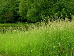 Lyme disease symptoms vary and ticks are tiny for Tall ornamental grasses for shaded areas