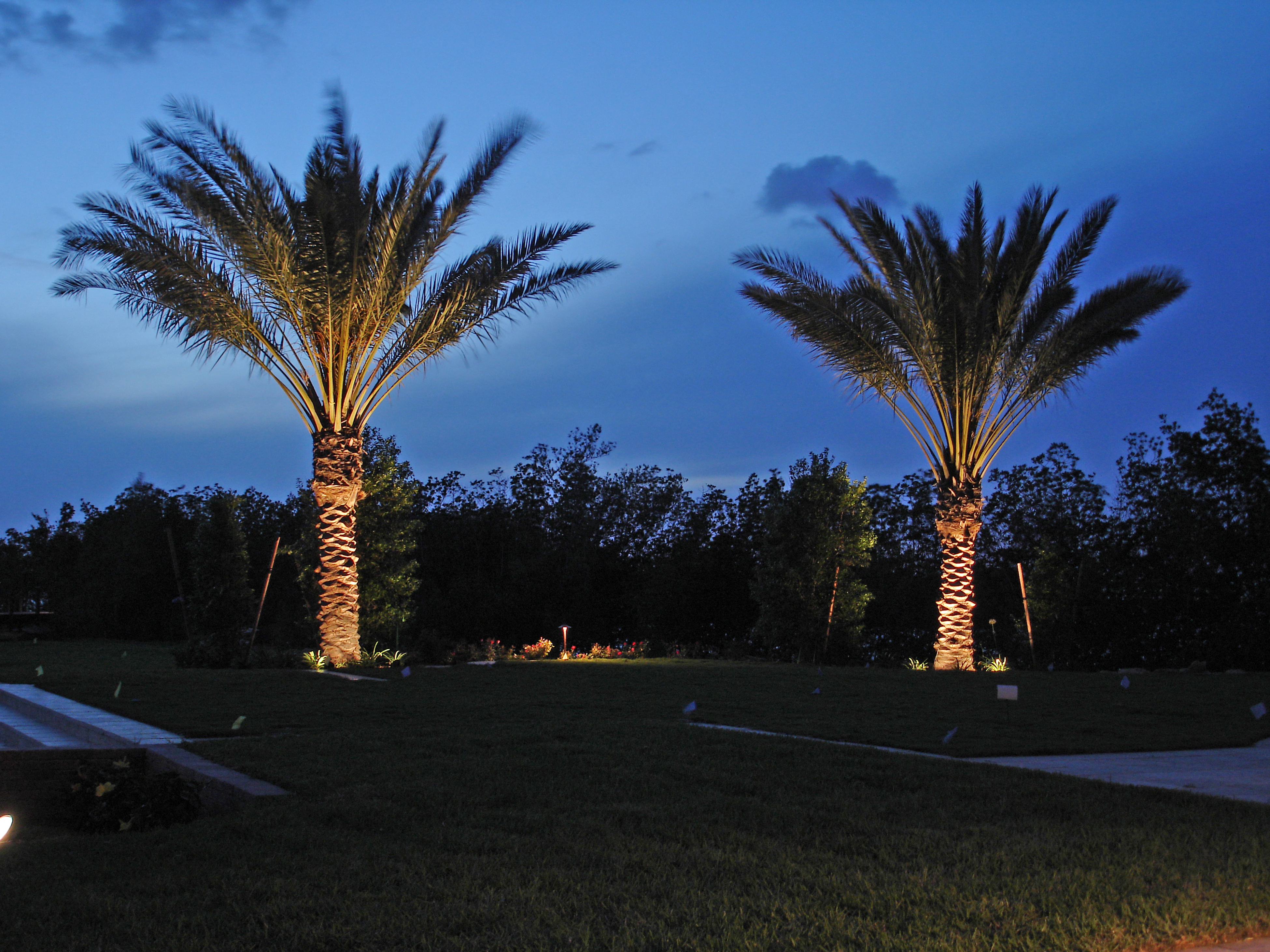 Landscape Lighting For Palm Trees : Outdoor lighting perspectives