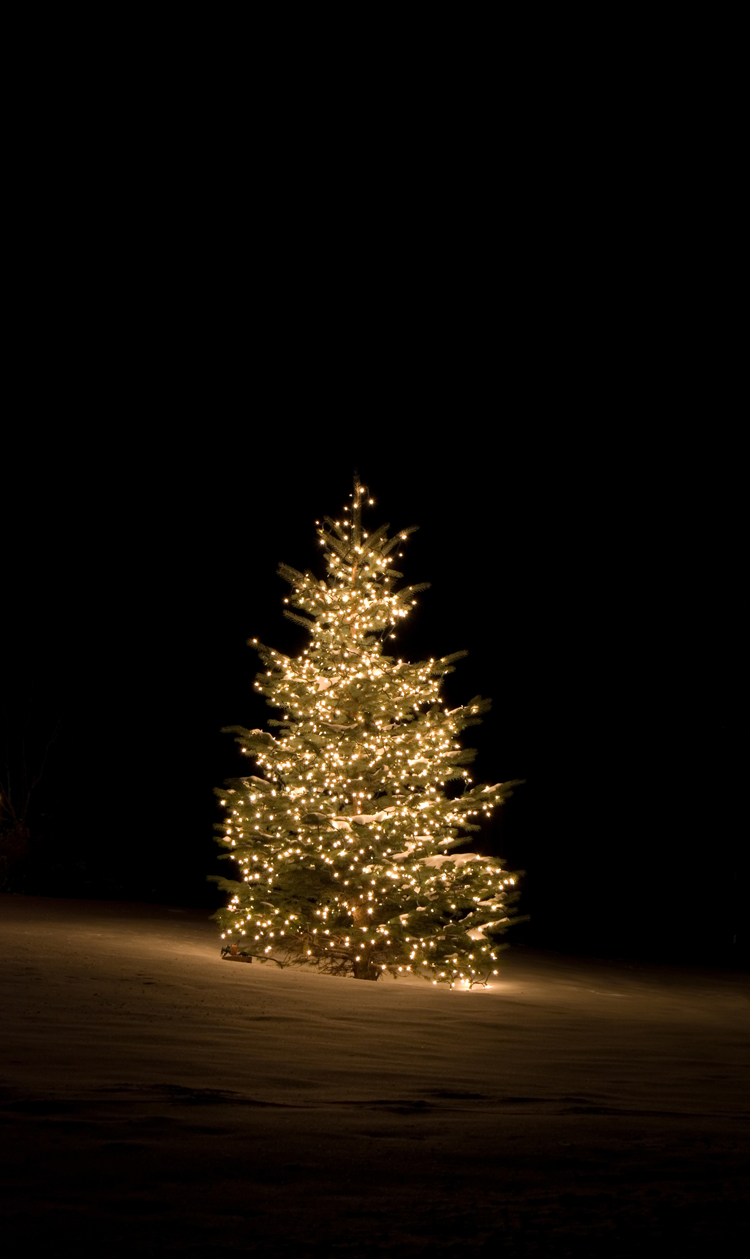 Outdoor Light Trees Christmas: Outdoor Lighting Perspectives,Lighting