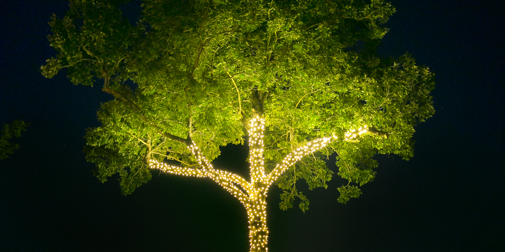 palm tree string lighting Mount Pleasant SC