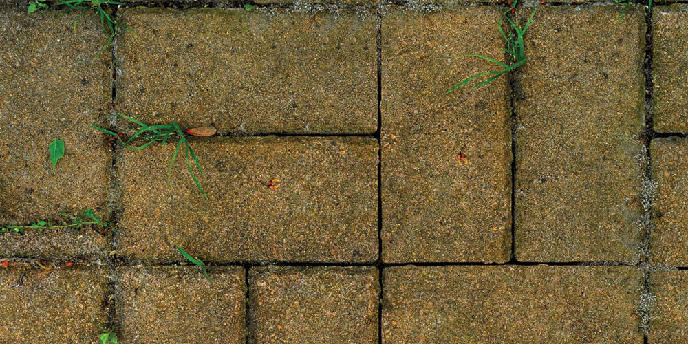 mold growth on pavers