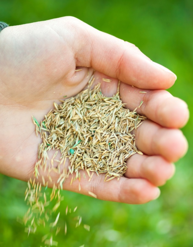 seed your lawn in fall
