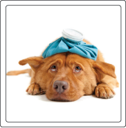 Mosquitoes and ticks can make your pets very sick.