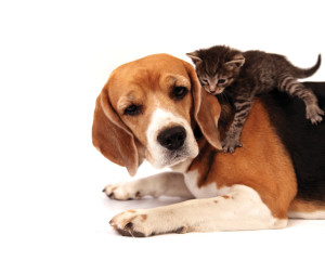Protect your pets with mosquito, flea and tick control.