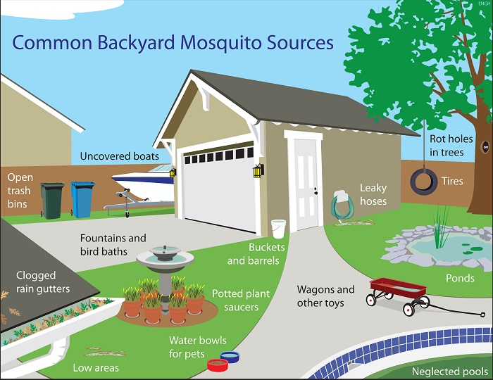Learn The 7 Tu0027s Of Mosquito Control For Your Hilton Head Backyard
