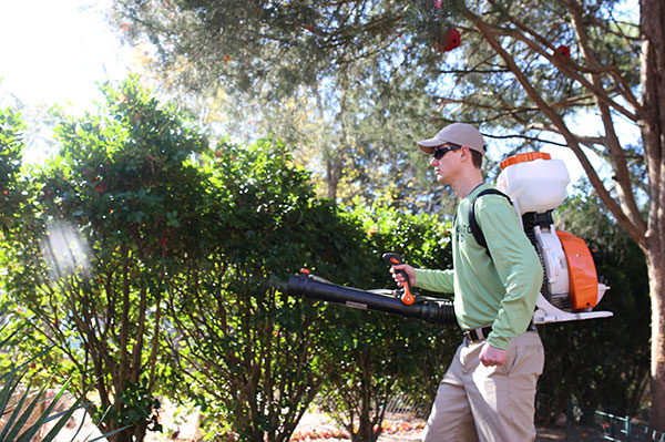 Mosquito Control In Myrtle Beach