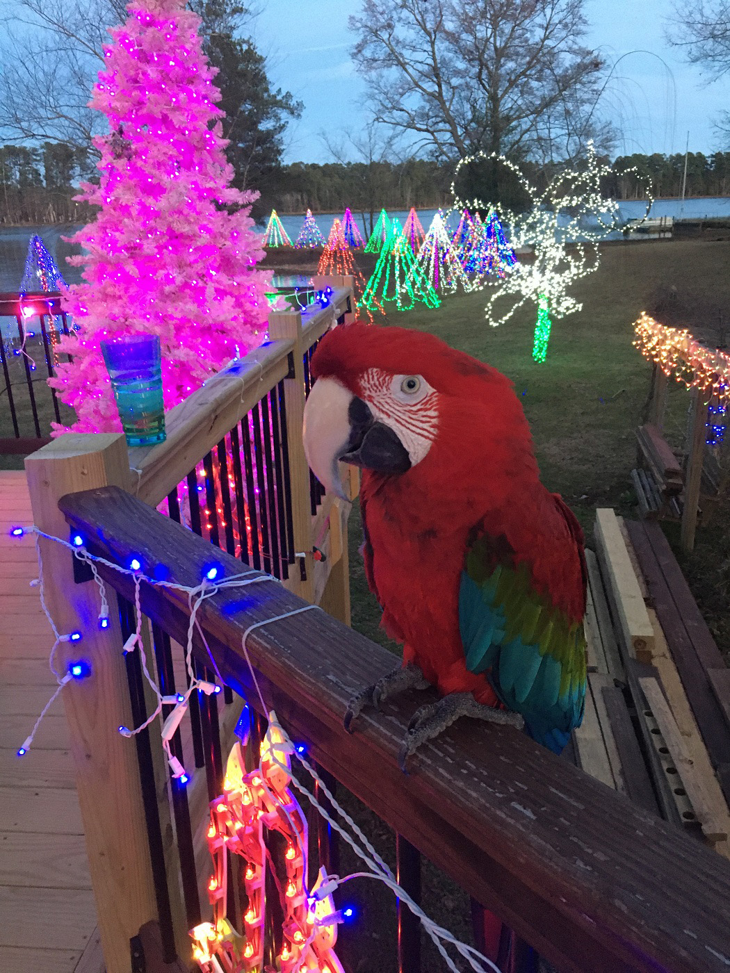 Did-we-mention-the-parrot-loves-the-new-sunroom-too-?