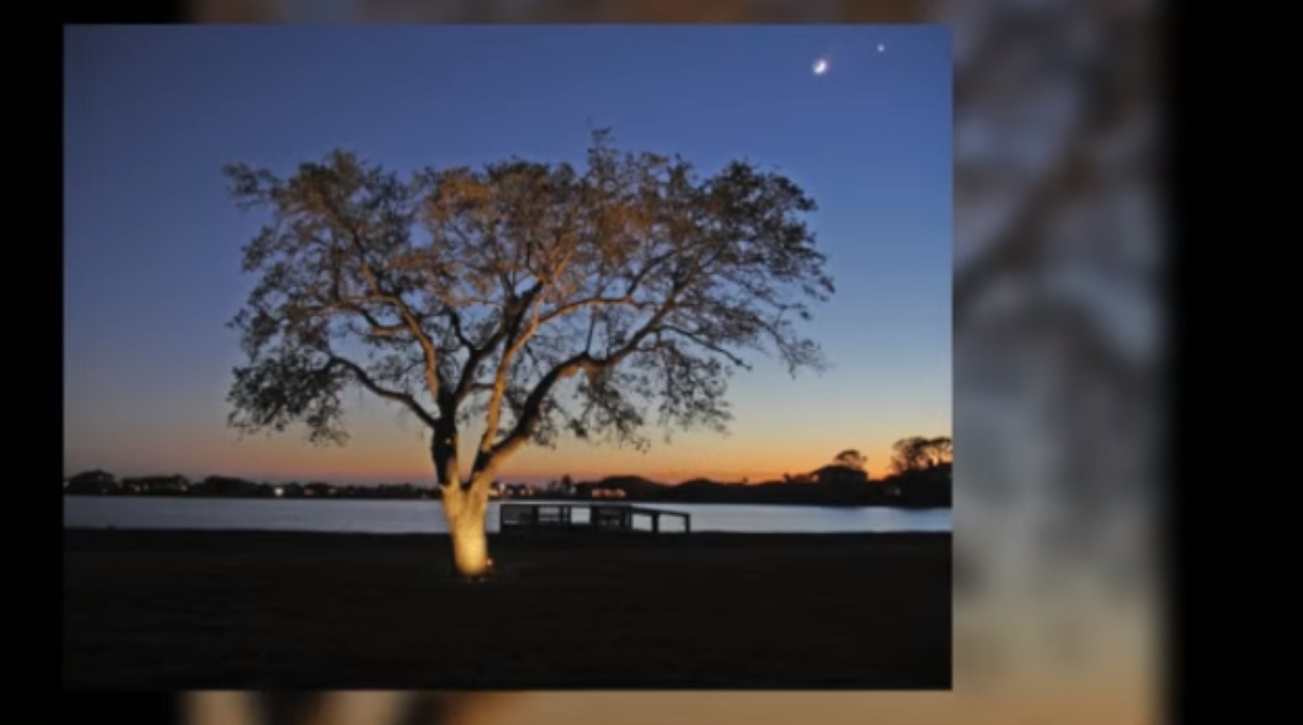 Outdoor Tree Lighting Creates Comfortable Outdoor Living in Southwest Florida Thumbnail