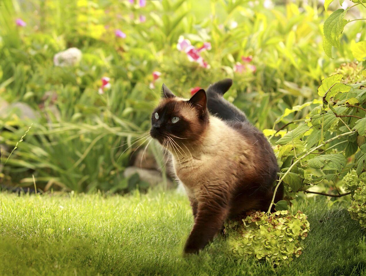 Cat roaming in a garden of flowers
