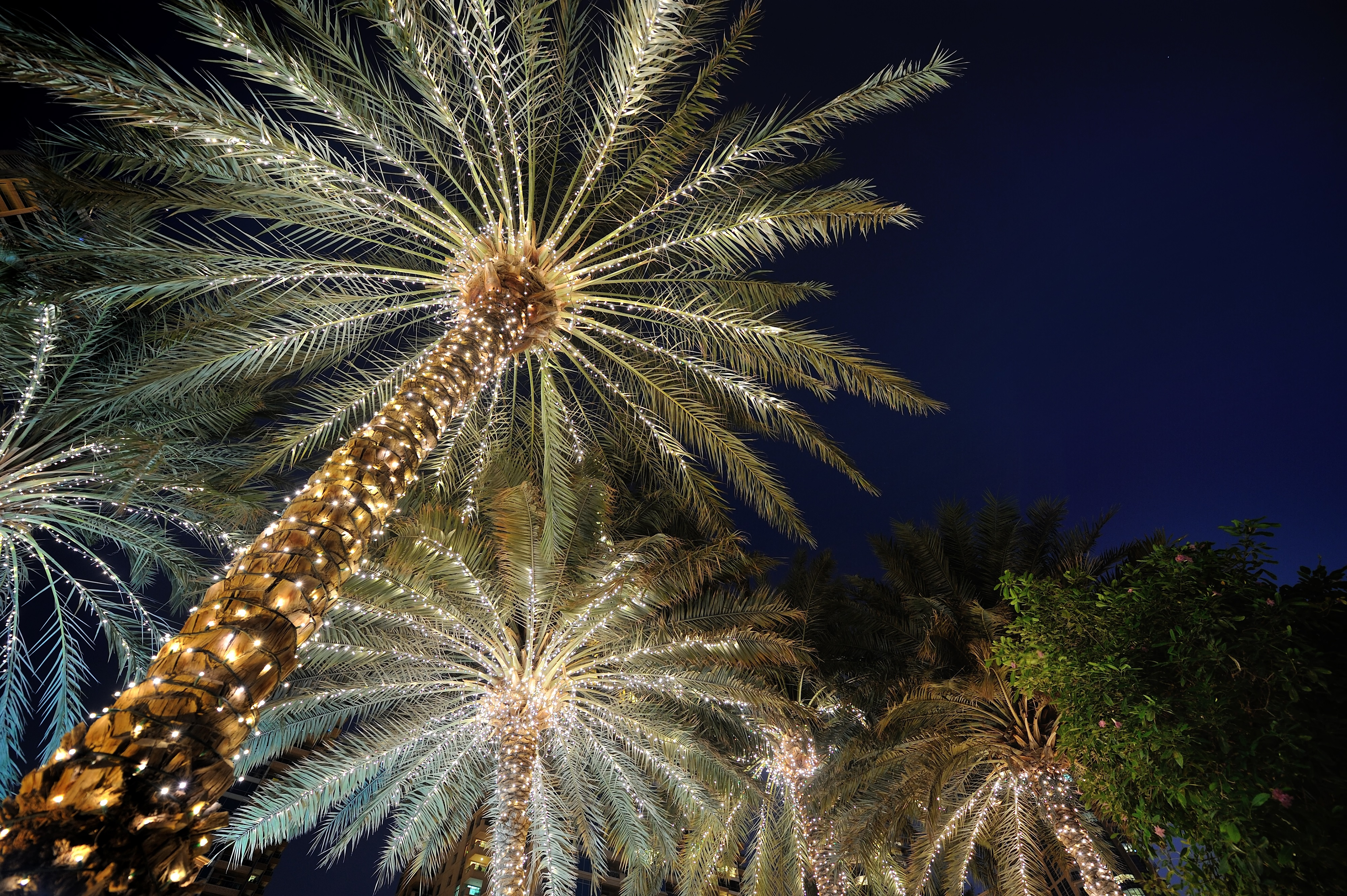 Palm Tree Lights Christmas.We Have Your Holiday Wilmington Palm Tree Lighting All
