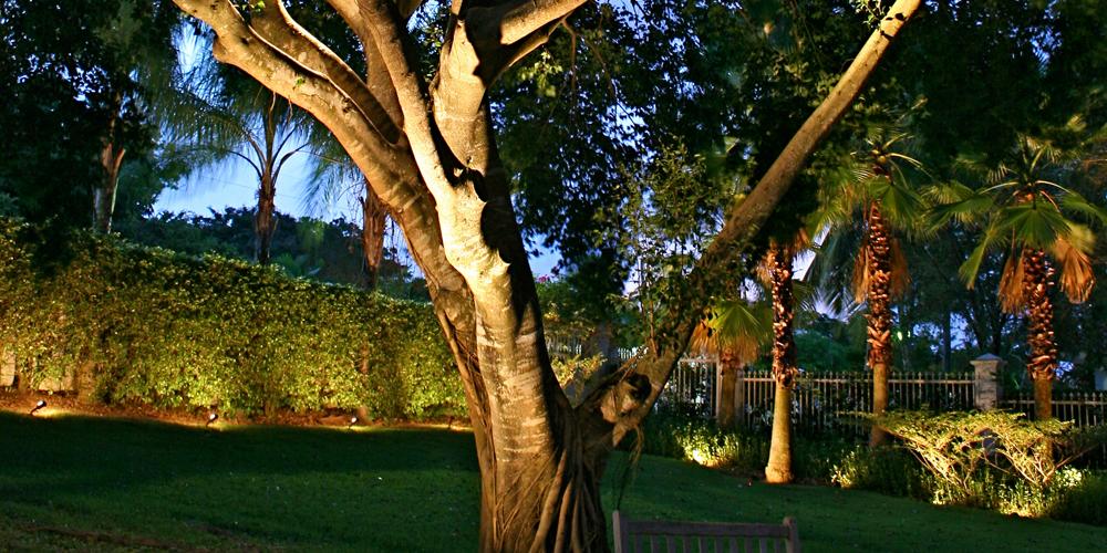 tree lighting Isle of Palms SC