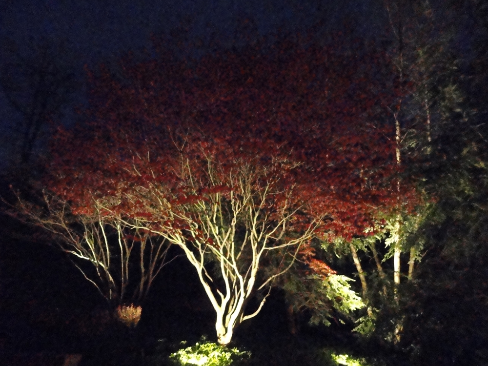 ... only one tree in your yard for professional illumination. Which one would you choose? Many homeowners have a prized ornamental such as a Japanese Maple ... & If you could illuminate only one tree in your yard which would it ...