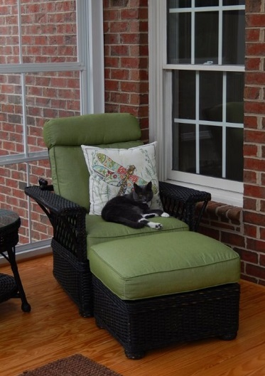 Cats-love-sunrooms-too