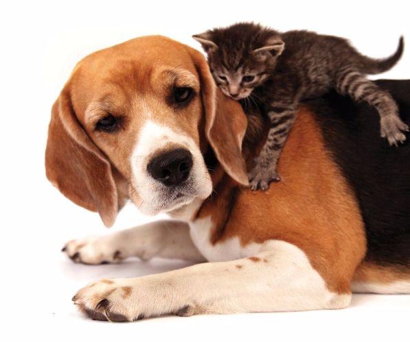 Kitten laying on older dog