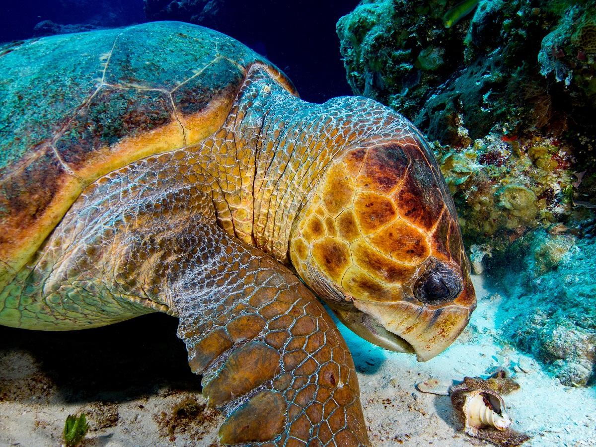 Lovely-sea-turtle-underwater