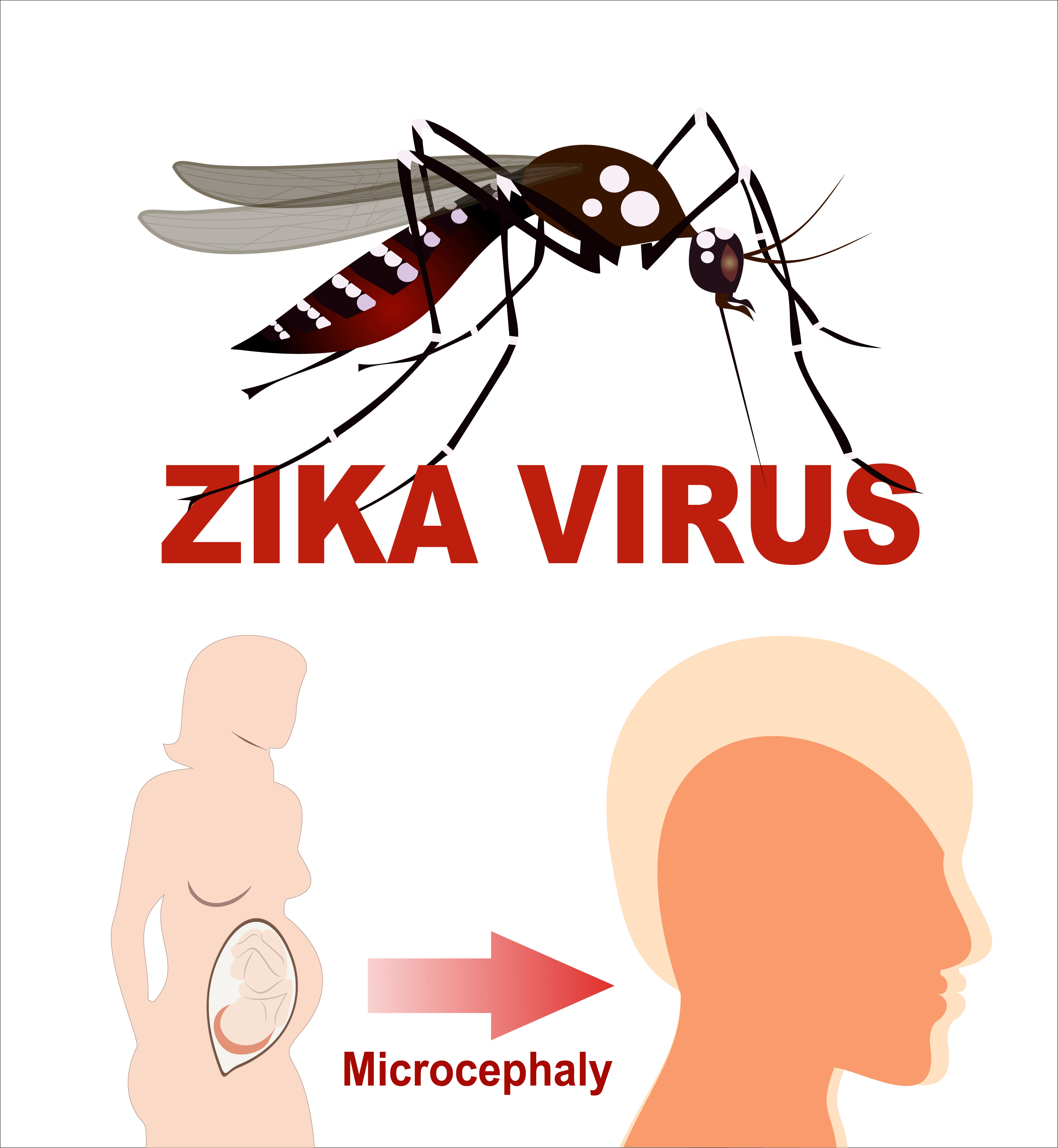 zika virus in Jacksonville