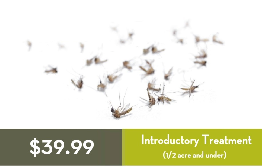 $39 Dead Mosquitoes