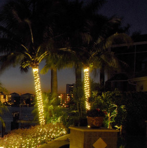String lighting for your wilmington palm trees add class and strings lights are no longer strictly used for holiday lighting with the right design and the right canvas string lighting can add class workwithnaturefo