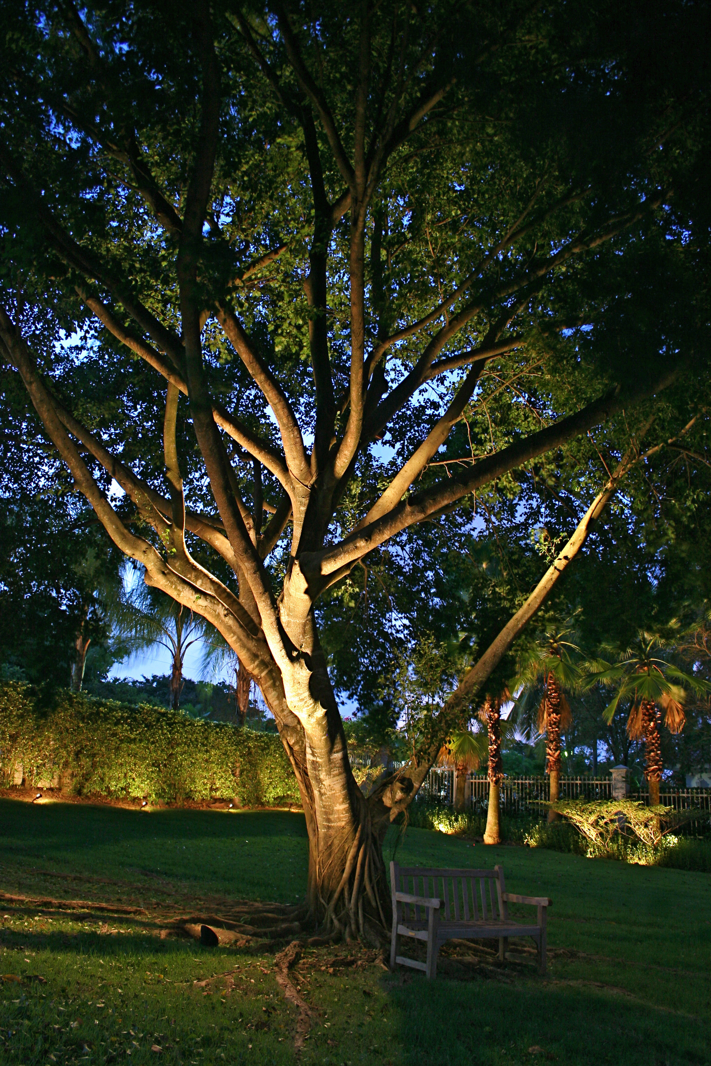 Outdoor Lighting Trees Tree lighting outdoor lighting perspectives up lighting on trees can make a dramatic statement workwithnaturefo