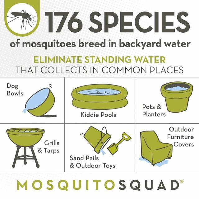Make your Greenville yard less favorable to mosquitoes ...