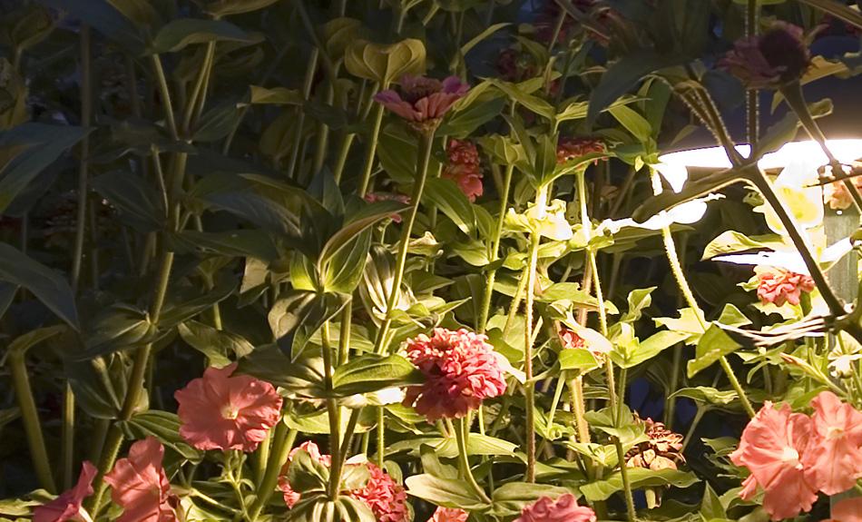garden lighting design in Charleston SC