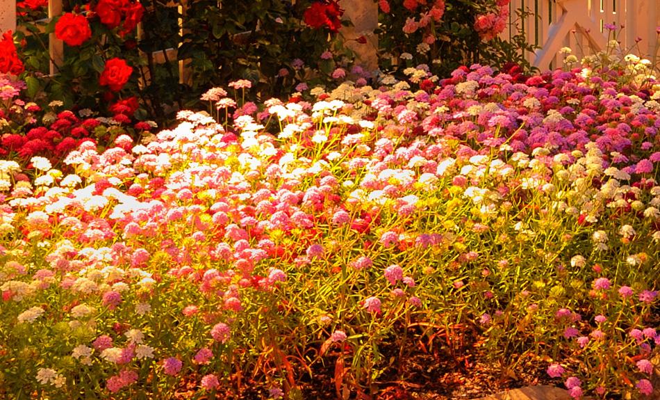 garden lighting Charleston SC