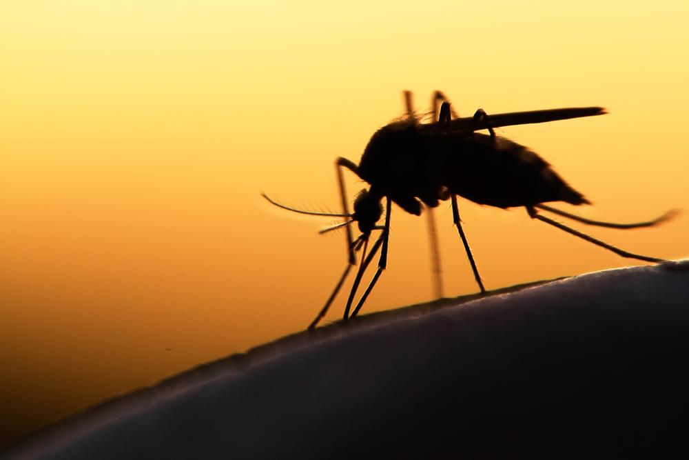 Minneapolis West Nile Virus Threat