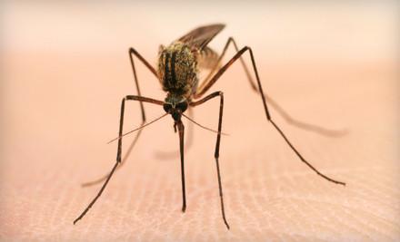 Wilmington Mosquito Control