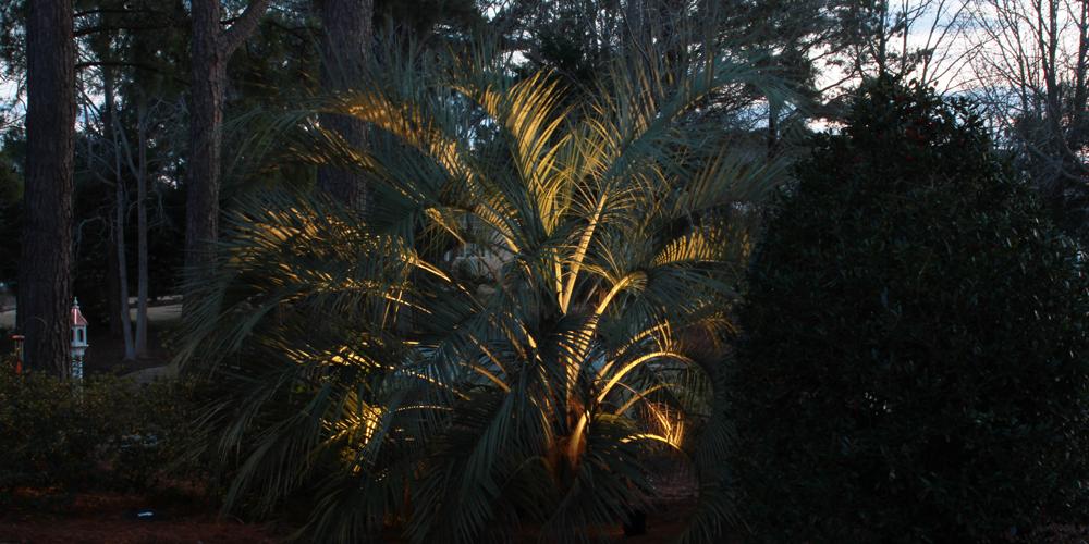 Charleston SC landscape lighting company