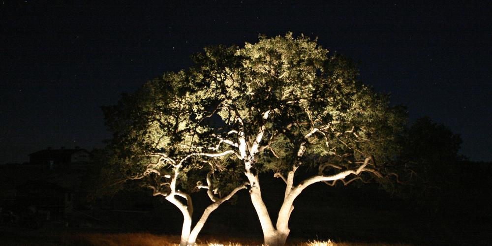 tree lighting Charleston SC