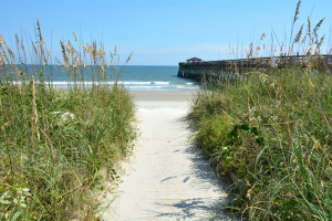 fleas_love_warm_humid_Myrtle_beach