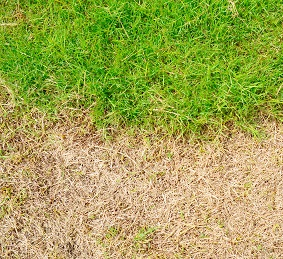 Renew Crew won't damage your grass with chemicals