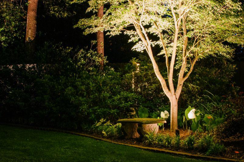 landscape tree lighting piney point village