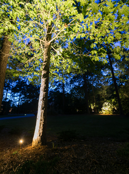 uplighting for trees in Charleston SC