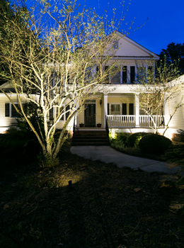 tree uplighting company Charleston SC