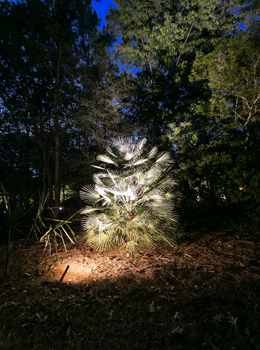 palm tree uplighting Charleston South Carolina